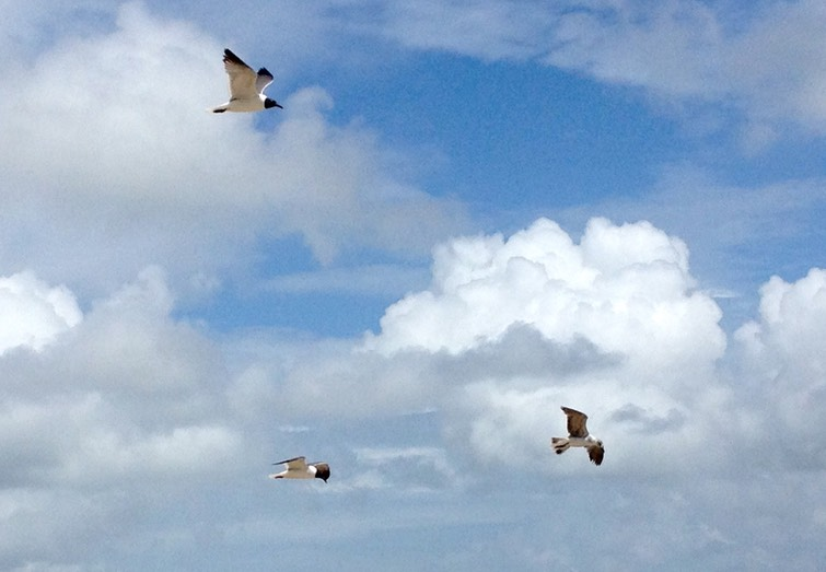 Clouds and Seagulls